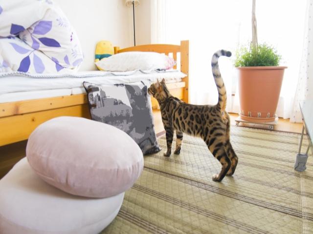 一人暮らしでも知っておきたい!猫トイレの場所はみんなどうしてる?