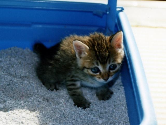 案外知られていない?!猫のトイレの置き場所に最適な場所はどこ?