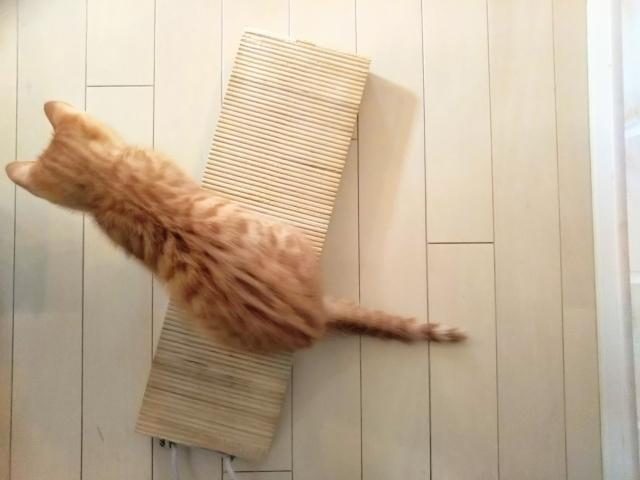 知らなきゃ損!猫の爪とぎ及びまたたびの効果的な使い方について!