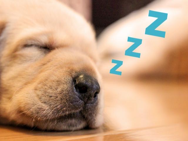 自分のいびきで目が覚める?!いびきにまつわるよもやま話!