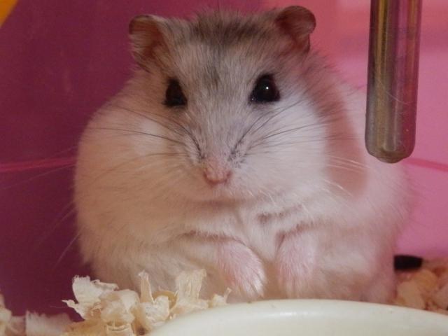 ハムスター飼育セットでおすすめアイテム&飼育方法を一挙公開!