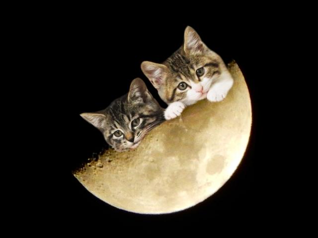 猫の夜泣きがうるさい!こんな時どうしたらいいの?原因と対策6選!